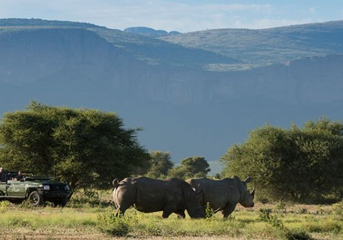 Endangered Rhino Safari 2017